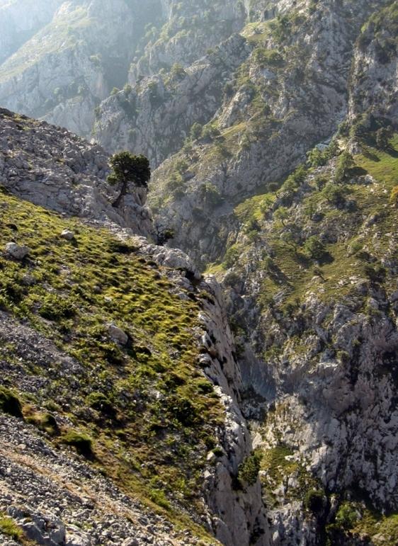 ruta cares asturias (17)