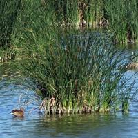 Curiosidades por el Delta del Ebro